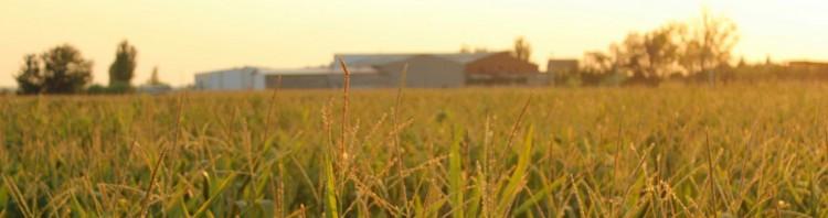 Un dato que llama la atención es que al 25 de abril pasado, los exportadores habían comprado 7 millones de toneladas de maíz, 3 millones más que lo adquirido en la misma fecha de 2014. Foto: El Cronista de Las Colonias