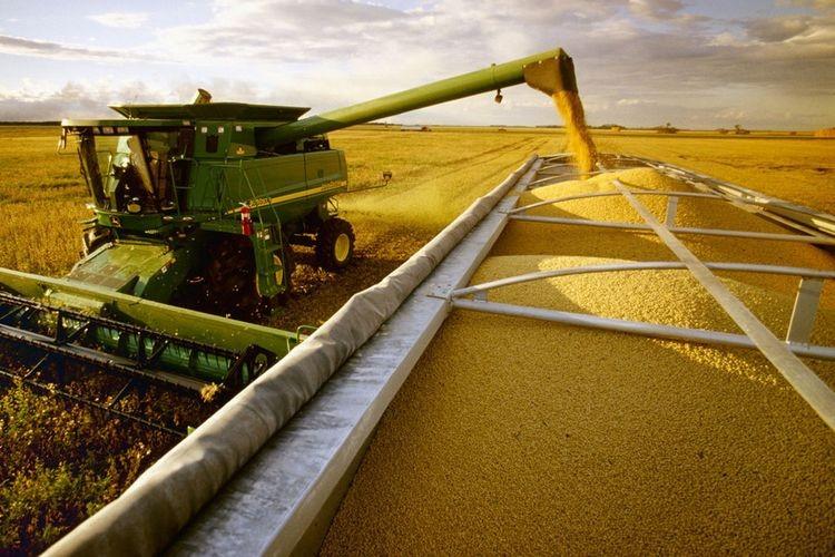 Según indicaron desde la Bolsa de Cereales de Buenos Aires pesar del escaso avance de cosecha, los rendimientos relevados en toda el área agrícola continúan superando las expectativas, por lo que de mantenerse esta tendencia la producción al cierre del ciclo podría ubicarse por encima a las 60.000.000 de toneladas actualmente proyectadas. Foto: Agencia