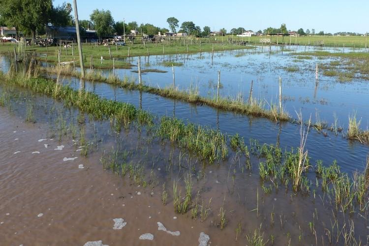 """""""De hecho en sur de Santa Fe y noreste bonaerense hay lotes que se sembraron hace quince días, y les está costando muchísimo emerger. Tras la última semana de setiembre, las lluvias dejaron marcas mensuales récord y una gran incertidumbre"""", detalla la BCR. Foto: Archivo"""
