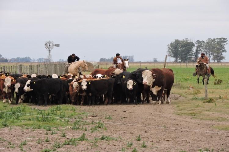 Ahora, la mesa está servida. La ganadería, se dice, es el negocio del eterno futuro. Mientras algunos productores relevantes muestran su preocupación por el avance de la carne artificial, el mercado chino les marca un horizonte diferente. Pero es también un desafío mayor.