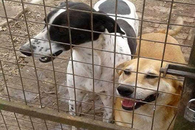 """""""Hay aún muchos animales que esperan tener un hogar, por eso llamamos a la conciencia de todos los habitantes a no abandonar; y a adoptar con responsabilidad y a tener sus mascotas con los cuidados necesarios"""", puntualizaron."""