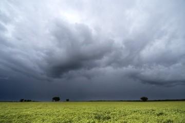 A través de ProRindes, una herramienta para realizar proyecciones de rendimiento en base al uso de modelos de simulación, el Movimiento CREA evaluó el impacto del déficit de lluvias y de las lluvias recientes en algunas zonas en los rendimientos de soja de primera y maíz temprano. Foto: Archivo