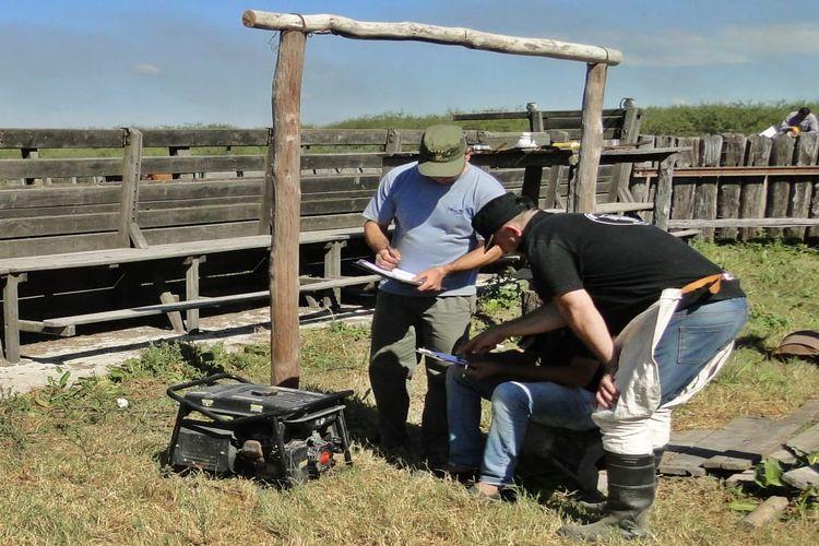 Los recientes casos de abigeato, que en apenas dos semanas incluyeron el robo y faenamiento de 27 animales, generó un fuerte reclamo por mayor seguridad por parte de productores ganaderos del departamento Las Colonias. Foto: Agencia