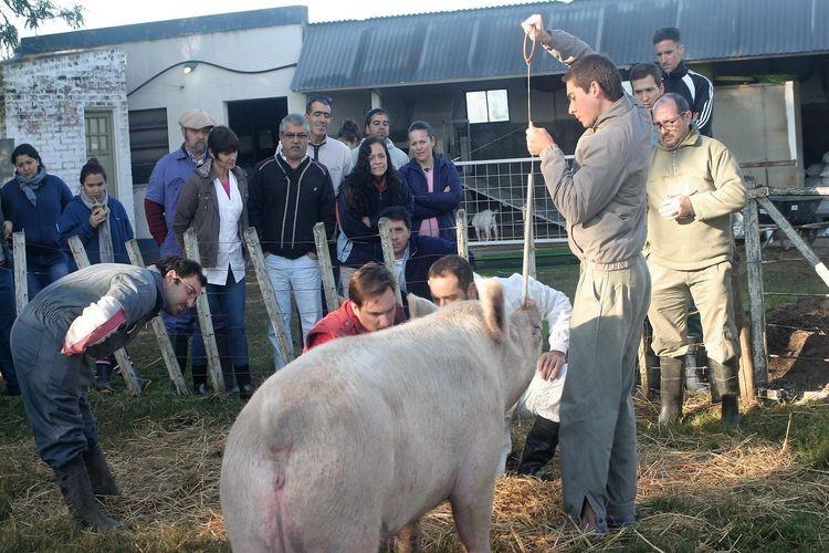 """El Temario """"Manejo de la Maternidad en la producción porcina"""", estará a cargo del Prof. M.V. Mariano Agosto. Foto: Archivo"""