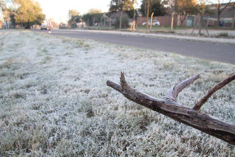 Las heladas serán muy importantes en todo el país, especialmente en la región pampeana, donde se observarán registros térmicos ampliamente por debajo de 0ºC. Foto: El Litoral