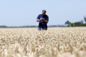 Según un informe de la entidad, la cosecha superará así en casi 2 millones de toneladas el volumen del ciclo 2017/2018. Foto: La Nación