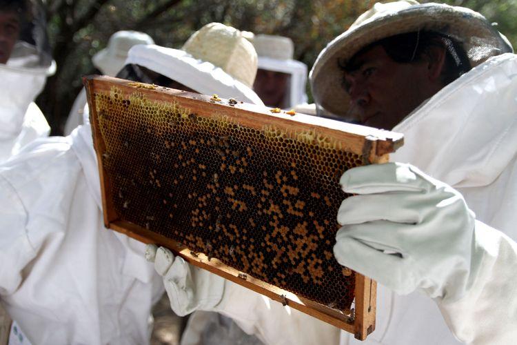 Así lo prevén desde la Cooperativa de Apicultores Unidos Limitada (Apiuni), que tiene base en la localidad de San Jerónimo Norte, en Santa Fe. Allí, unos 28 productores trabajan desde hace tres años en la industrialización de la miel y en llegar con productos de calidad a los comercios. Foto: Agencia