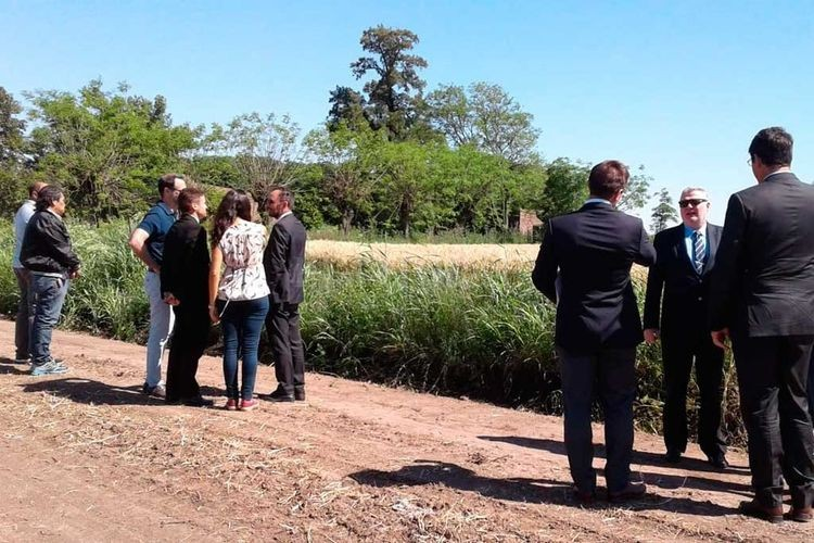 Los agentes federales le ratificaron a la jueza la posición que encontraron a los imputados, estaban cuerpo a tierra en un campo con soja. Foto: El litoral