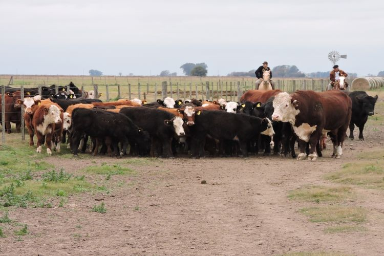 José Lizzi, Líder del Área de Ganadería de CREA, se refirió a las proyecciones para el mercado de la carne y el negocio ganadero en Argentina. Foto: El Litoral